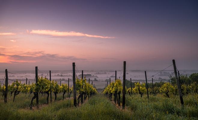 Dtc Wine Ecommerce Report